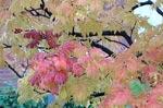 Sorbus 'Ullung-do' byter till höstfärg