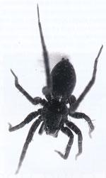 Spindelrikedom i omväxlande landskap