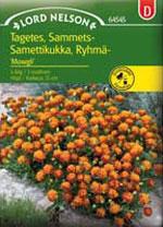 Tagetes patula nana 'Mowgli', minitagetes