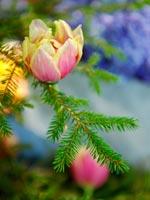 Tulpaner i stället för julgranskulor