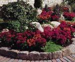 Varför inte prova på något nytt i rabatten. Här har det planterats kalanchoë tillsammans med andra växter. Snyggt och annorlunda.