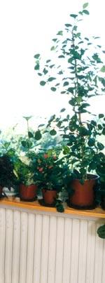 Så påverkar växterna vår hälsa