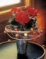 Julbegonia, Begonia elatior 'Barkos'