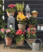 Krukväxternas sommarlov