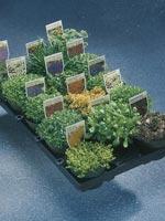 Stenpartiväxter