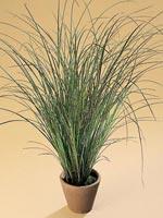 Rumsstarr, Carex brunnea