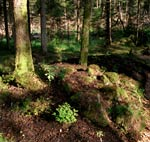 Skogsbädd