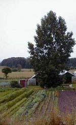 Romanäs Trädgård